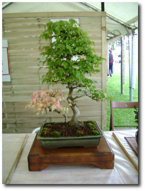 Fête des Fleurs 2008