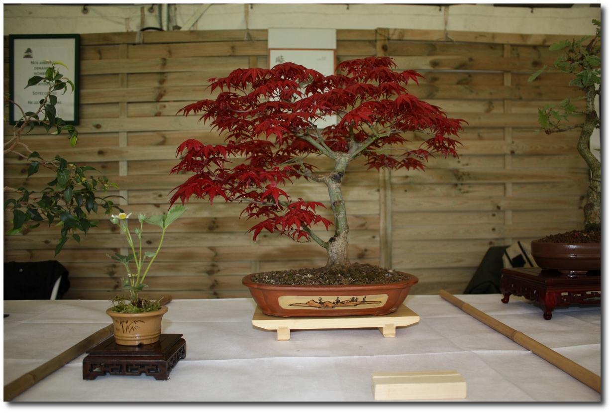 Fête des Fleurs 2009