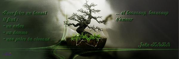 Pour faire un bonsai